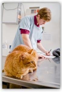Pet Insurance cat