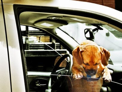 Accident Pet Insurance