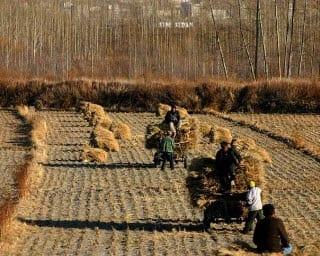 China Crop Insurance