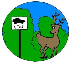 I hit a deer