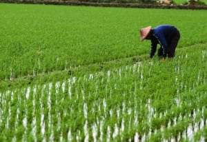 Crop climate change Insurance