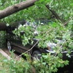 windstorm xaver insurance news