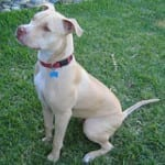 Dog liability homeowners insurance