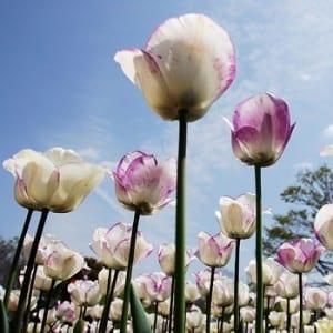 Flowers for Kile Glover