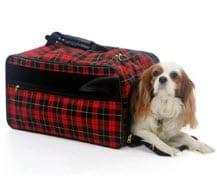 Pet Insurance for travel
