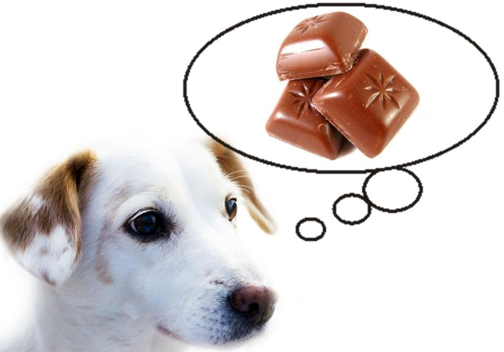 pet insurance chocolate