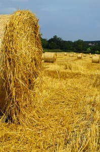 crop insurance policy
