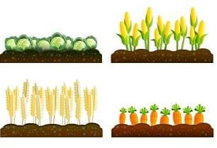 crop insurance rules