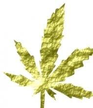 medical marijuana - insurance policy