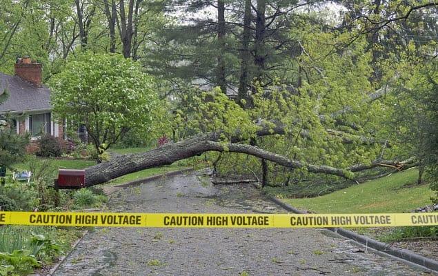 severe weather storm tree power