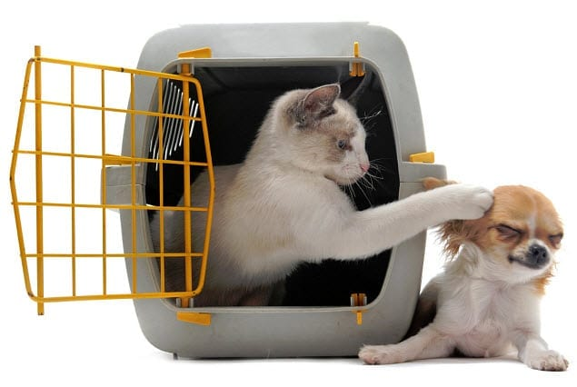 pet insurance info