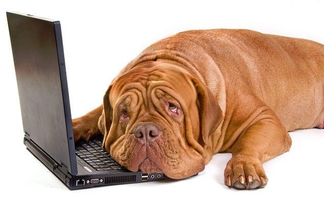 pet insurance news