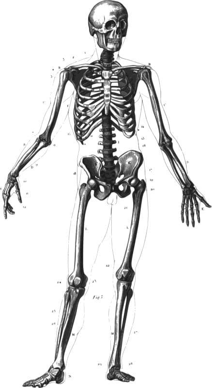 Osteoporosis prevention month bone health skeleton