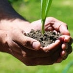 global insurance industry - earth day plant growth
