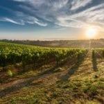 crop insurance program - farm