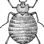 bedbug animal related strange insurance claims
