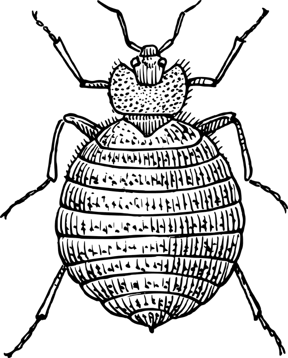 bedbug animal related strange insurance claims