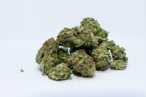 cannabis business insurance marijuana