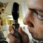 kitten veterinarian pet insurance benefits