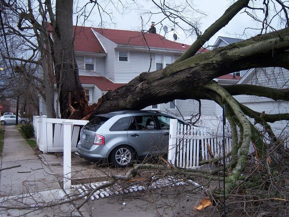 hurricane irma insurance losses