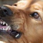 Dog Bite Insurance - Homeowners Insurance - Aggressive Dog - Angry Dog -