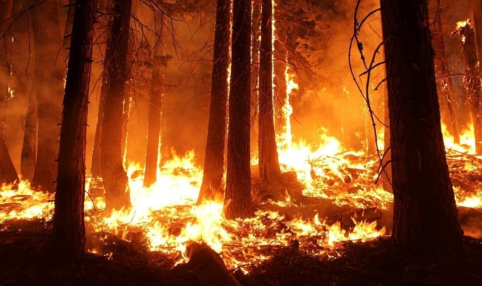 California wildfire insurance - forest fire