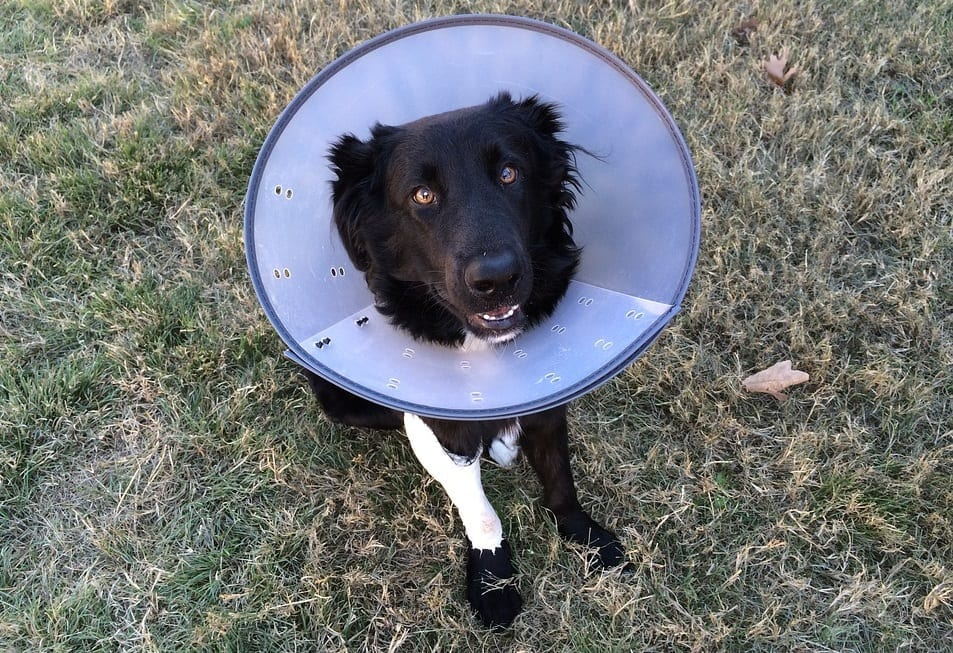 Pet Insurance Popularity - Dog in Cone