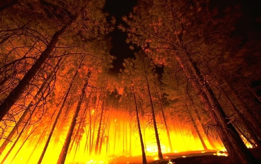 Wildfire insurance problems - Forest Fire