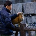 Japanese Pet Insurance - Man with Cat in Japan