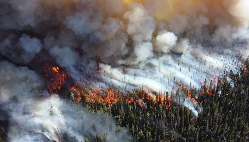 High risk insurance - Wildfire in Forest