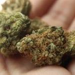 life insurance companies - Marijuana