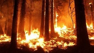 California Insurance Industry - Wildfires