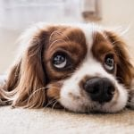 Dog insurance premiums - Dog - cute dog -sad dog