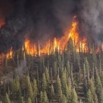 Allstate Wildfire Losses - Fire in forest