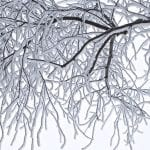 polar vortex safety - frost trees