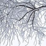 polar vortex safety - frost trees