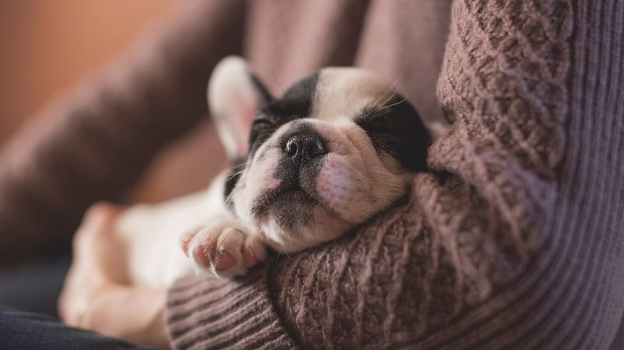 National Puppy Day - Cute Puppy