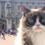 Social media insurance loss - Image of Grumpy Cat