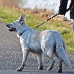 Dog walker insurance - Man walking dog