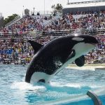 SeaWorld Parking Lot - Orca jumping at SeaWorld