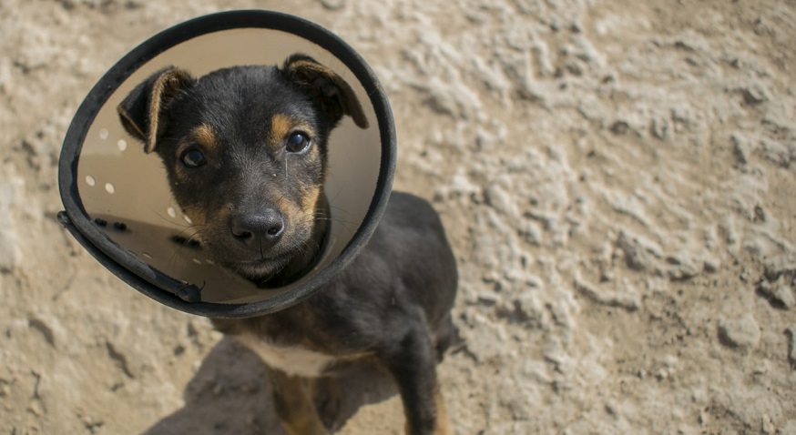 pet insurance policies - dog with head cone