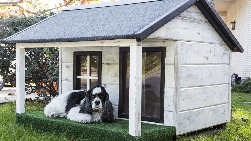 pet boarding insurance - dog outside dog house
