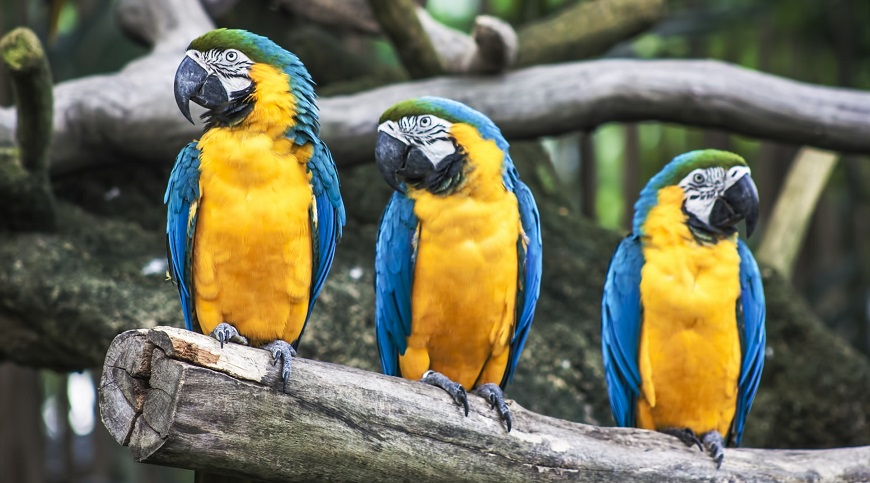 Exotic pet insurance - Macaw Parrot
