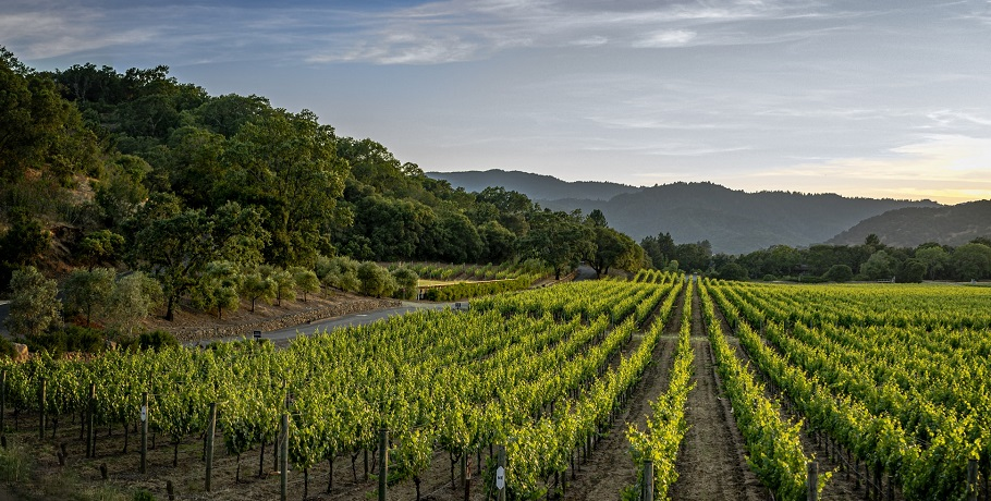 California crop insurance - Vineyard