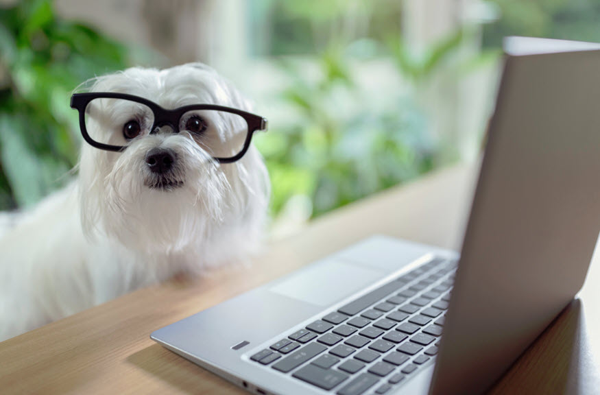 pet insurance for business and how it works
