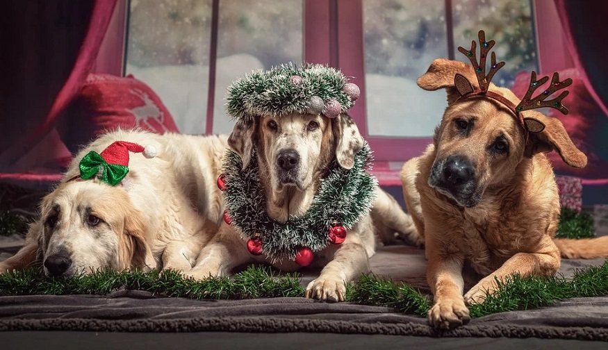 Holiday pet risks - dogs wearing xmas costumes