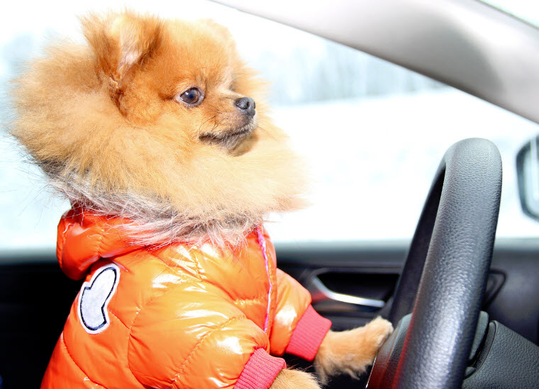 car insurance does not cover dogs or other pets ask a local car insurance agent #insurancenews