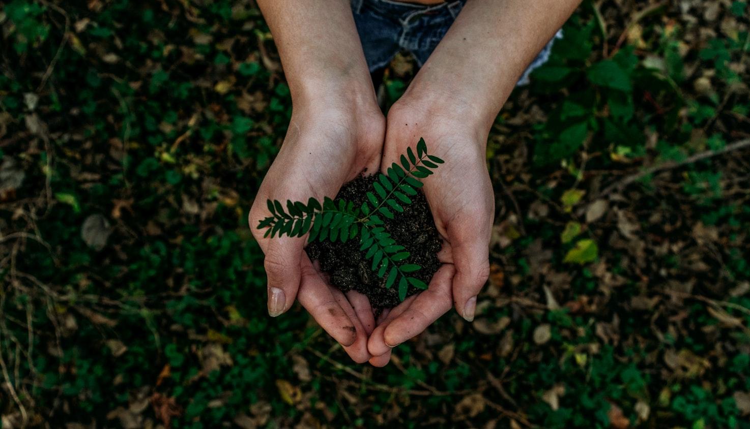 Dairyland Insurance - planting tree