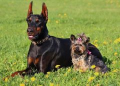 Home insurance coverage rules shock many new dog owners in adoption boom
