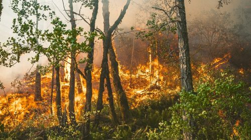 Oregon Wildfire Insurance - Forest Fire in Portland, Oregon